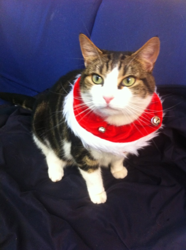 They're spoiling Tigger down at the stables - here he's decked out in a rather snazzy festive collar!