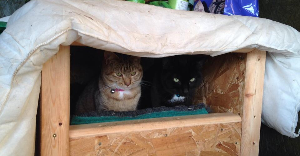 """Fang and Cindy r lovely a friendly & love cuddles they love their new home & cat house. Thank u!"""